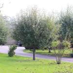 Garten_02